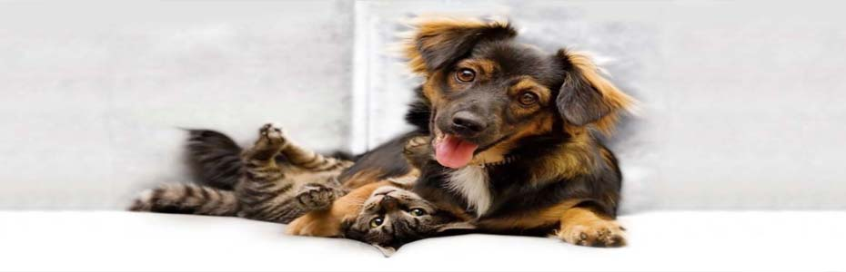 Pentru ca un om să aibă o perspectiva reală despre importanţa sa, este necesar să aibă un câine care să-l venereze, şi o pisică care să îl ignore.
