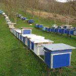 Despre apicultura , albine , miere si stupari