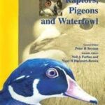BSAVA Manual of Raptors, Pigeons and Waterfowl