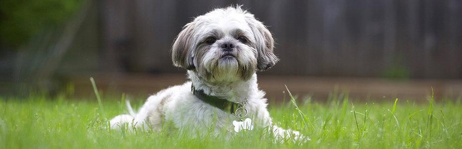 Câinele este singurul animal din lume care te poate iubi mai mult decât se iubeşte pe el însuşi