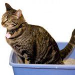 Constipatia la pisica (coprostaza)