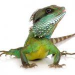 Reducerea riscului de infecţie cu  Salmonella de la reptile