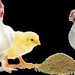 Normele de aminoacizi esentiali pentru pasari